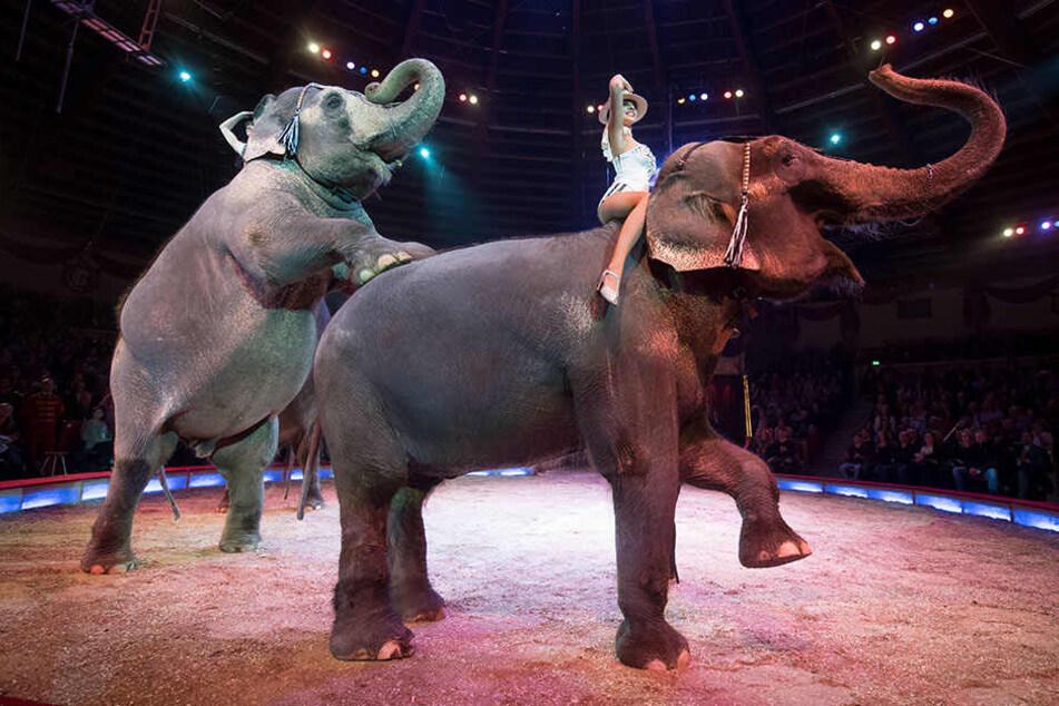 Die Leipziger Verwaltung sieht kaum noch Chancen, Zirkusbetriebe mit Wildtieren von städtischen Flächen fernzuhalten (Symbolbild).