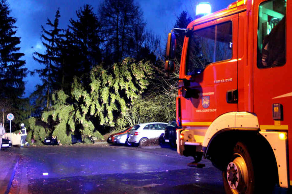 In Heiligenstadt entwurzelte der Sturm eine 25 Meter hohe Tanne.