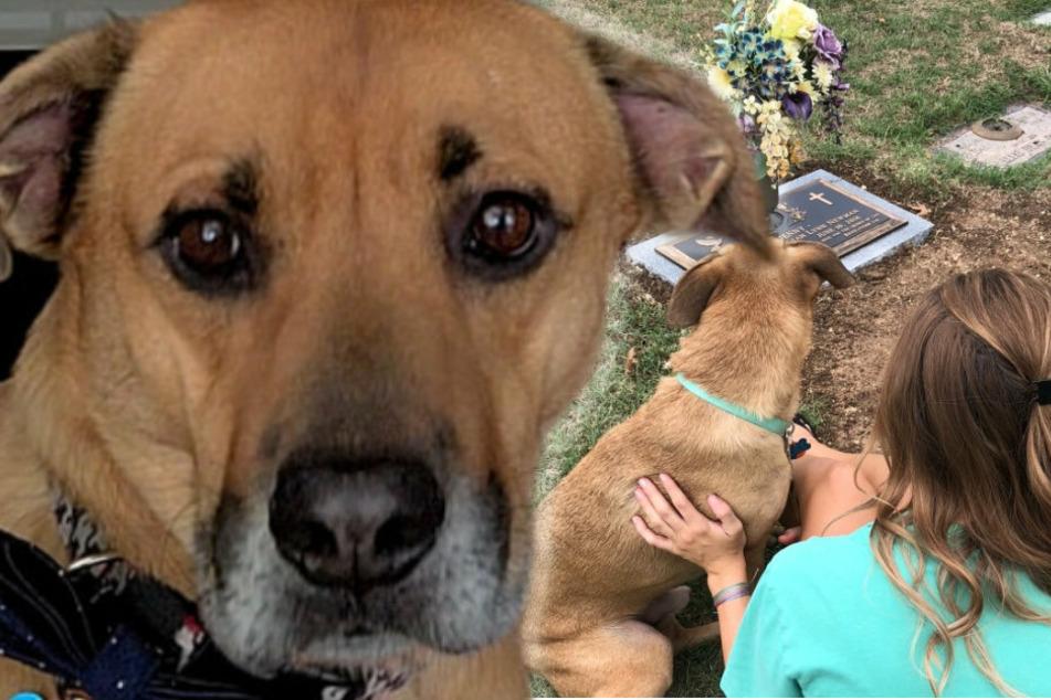 Frau verliert Schwester an Krebs: Ihr letztes Versprechen ist, sich um ihren Hund zu kümmern