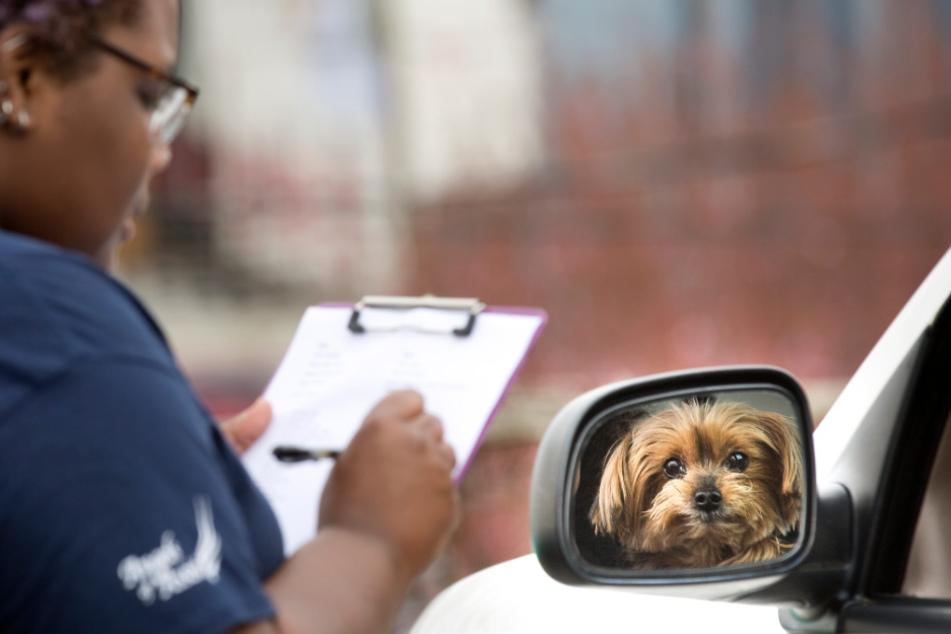Abstandsregeln auch für Hunde?