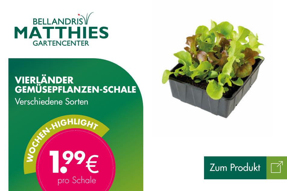 Vierländer Gemüsepflanzen-Schale für je 1,99 Euro