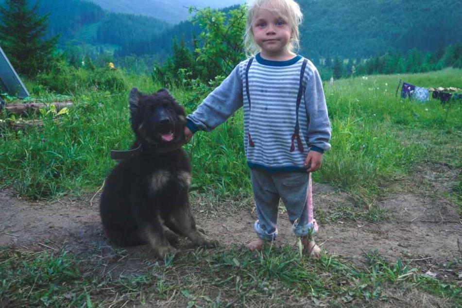 Hunde müssen an den Umgang mit Kindern gewöhnt werden.