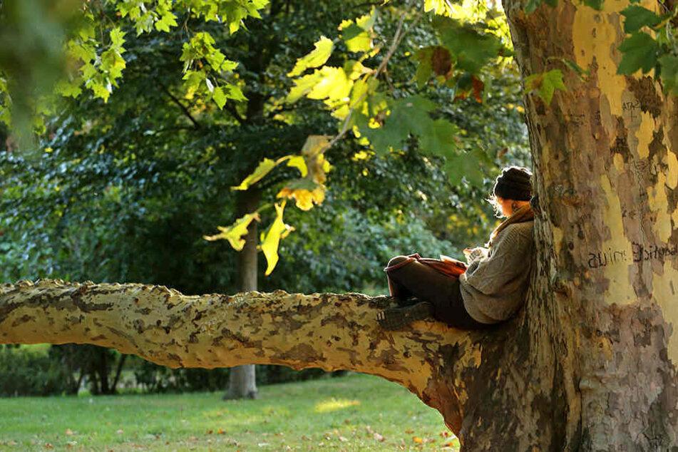 Der Umweltbürgermeister hofft sogar auf 45.000 neue Bäume für die Messestadt. (Symbolbild)