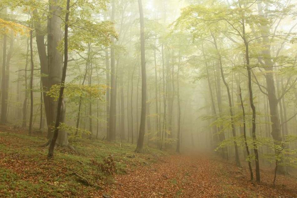 Die mysteriösen Schreie kamen aus einem Wald. (Symbolbild)