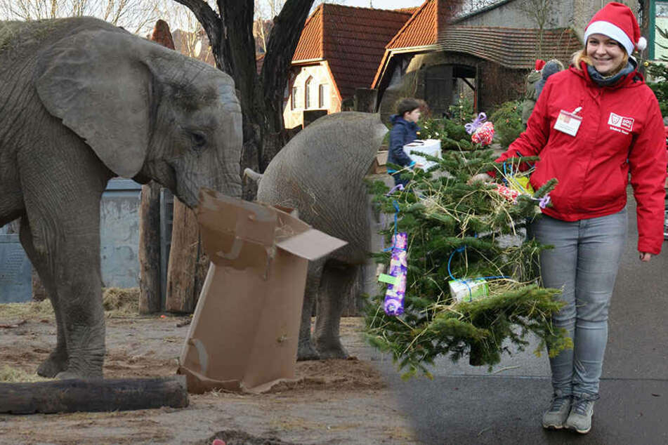 Zoo-Tiere bekommen an Heiligabend Weihnachtsbäume und Geschenke