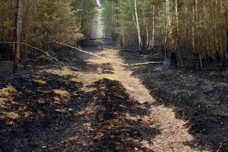 Der Waldbrand in der Lieberoser Heide ist immer noch nicht unter Kontrolle gebracht.