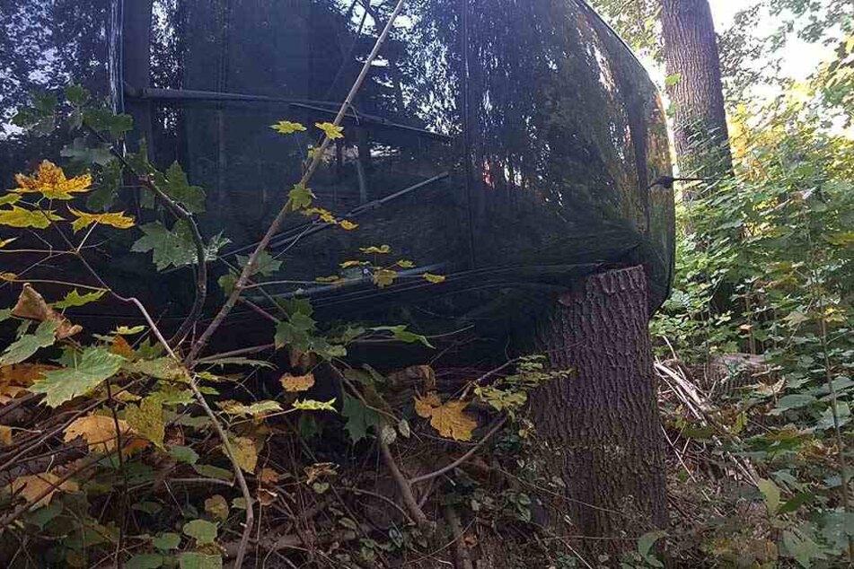 Der Baumstumpf traf nur die hintere, unbesetzte Rückbank.