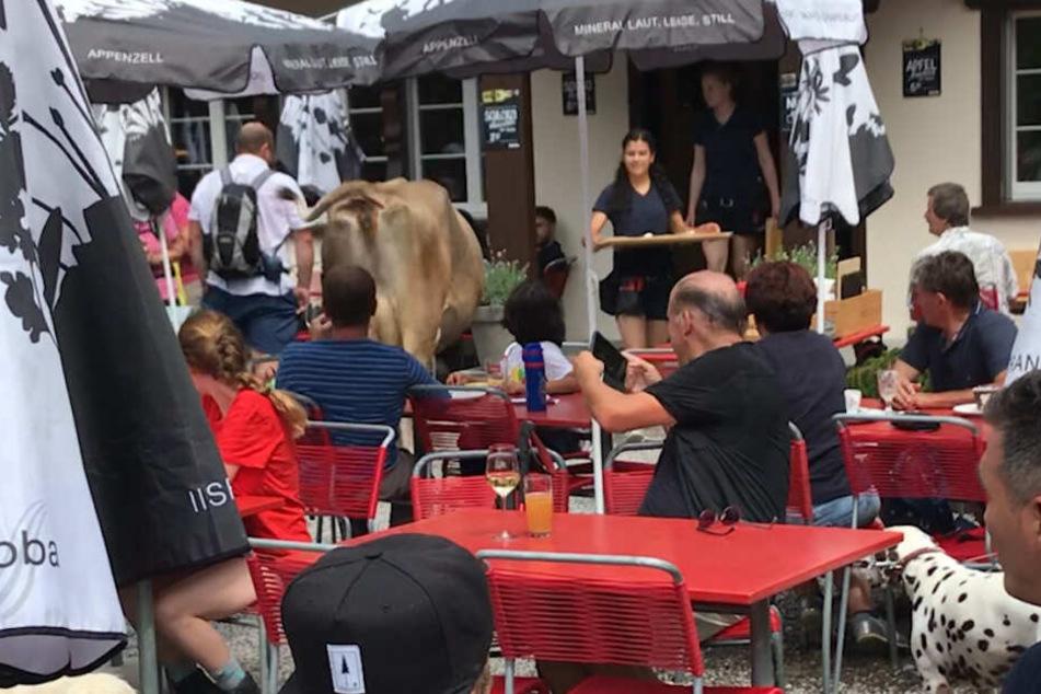 Die Kuh zwischen den Tischen des Restaurants: Ob das Tier auch bedient wurde, ist nicht bekannt.