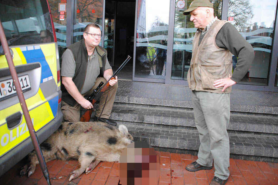 Jäger Uwe Ingwersen (li) kniet neben dem von ihm erlegten Wildschwein. Rechts im Bild der Stadtjäger Horst Allwardt.