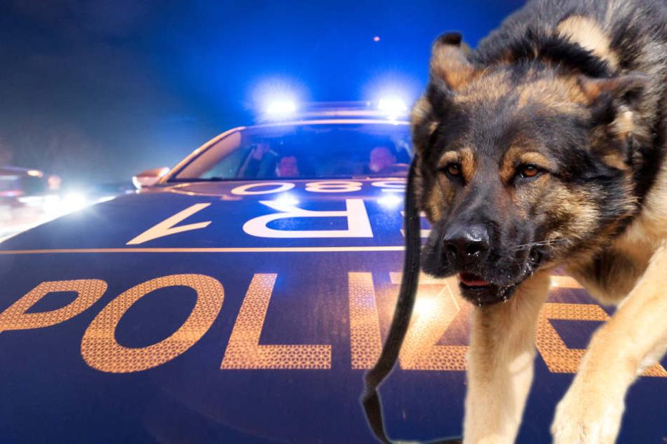 Randalierer tritt Polizisten ins Gesicht, den Rest regelt ein Hund