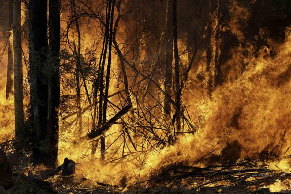 Die verheerenden Buschbrände in Australien sorgen weltweit für Betroffenheit.