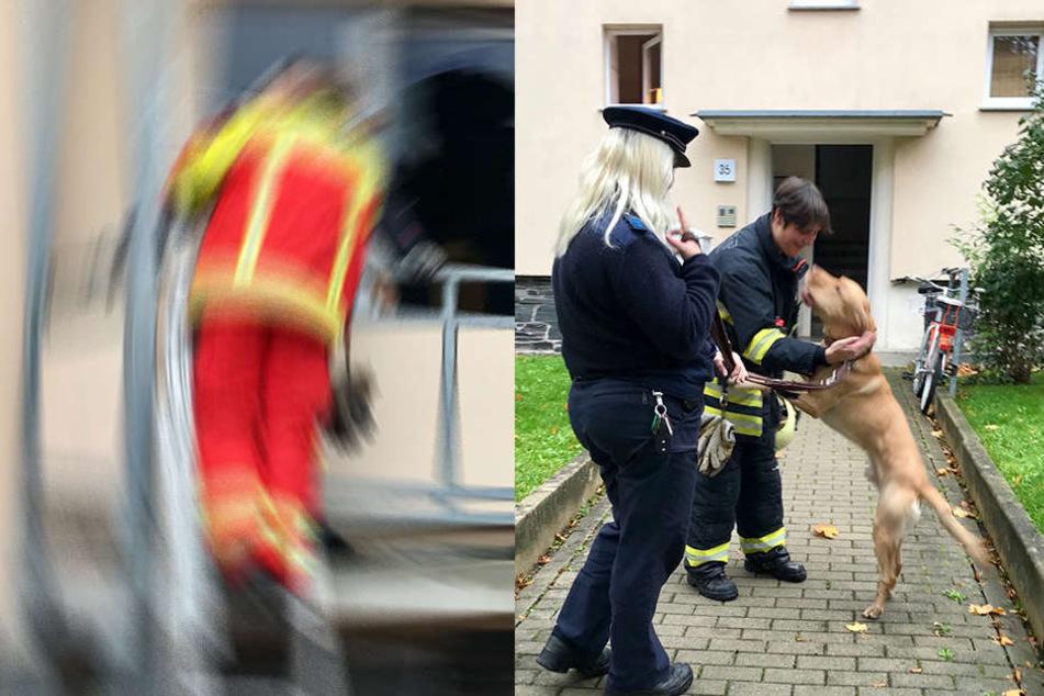 Einsatzkräfte kümmern sich um den Hund.