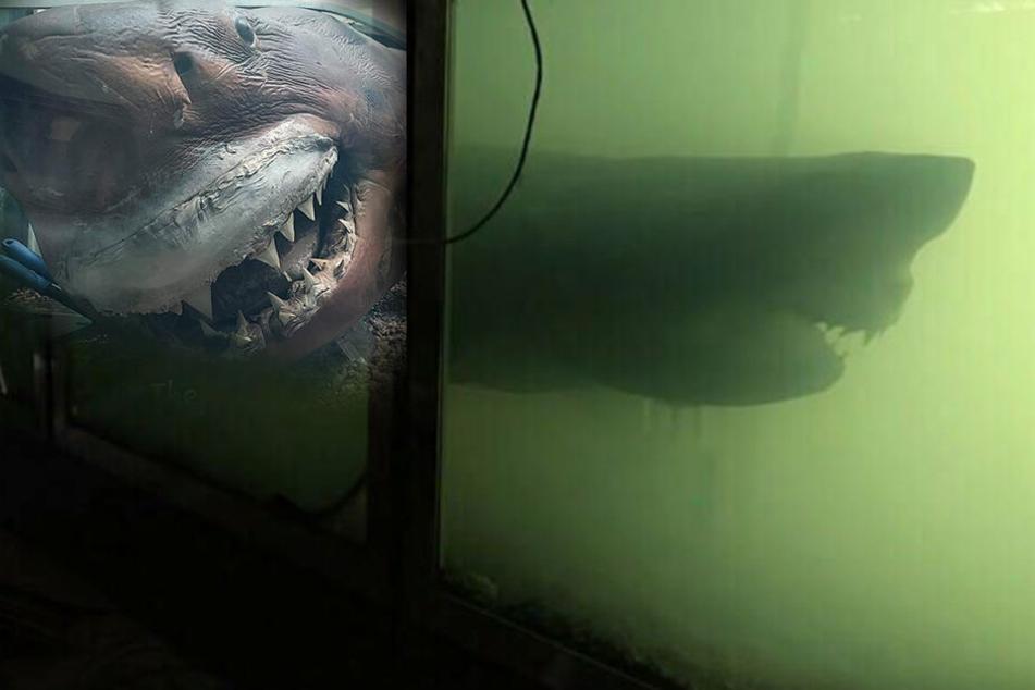 Riesiger Weißer Hai aus verlassenem Park ist umgezogen: So sieht er jetzt aus!