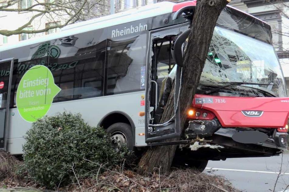 Bus verkantet sich in Baum: Fünf Verletzte