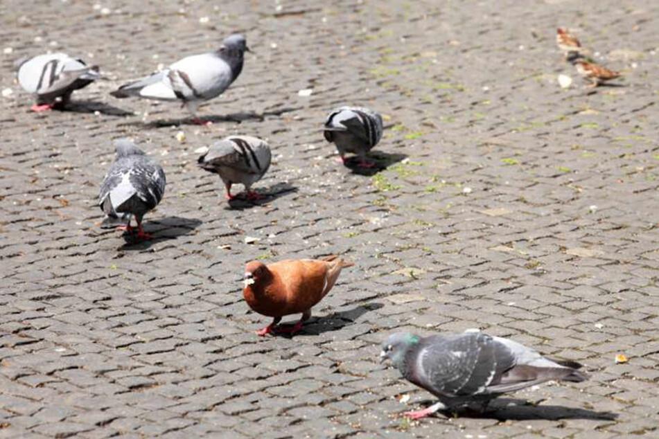 Die Tauben waren dem Vermieter und den Nachbarn ein Dorn im Auge.