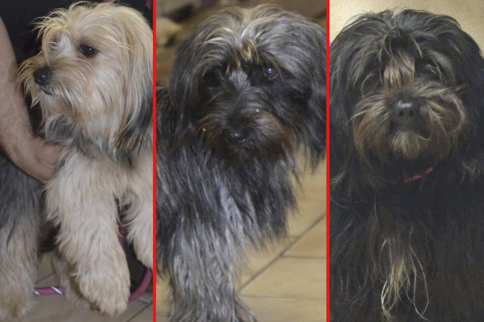 Die Hunde wurden aus drei verschiedenen Tierheimen geklaut und gelten seither als vermisst.