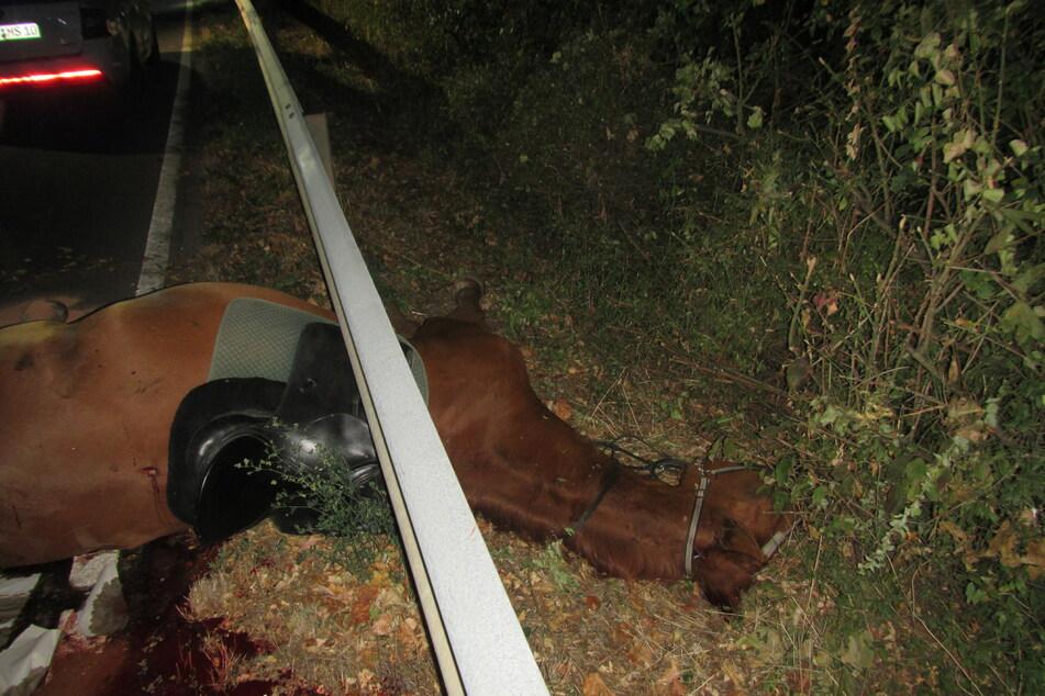 Das bei dem Unfall schwer verletzte Pferd musste von der Polizei erschossen werden.