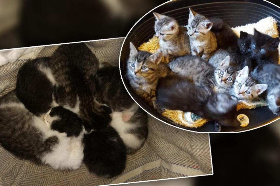 Kleine Kätzchen in Schrottcontainer entsorgt: Kitten-Alarm in sächsischem Tierheim