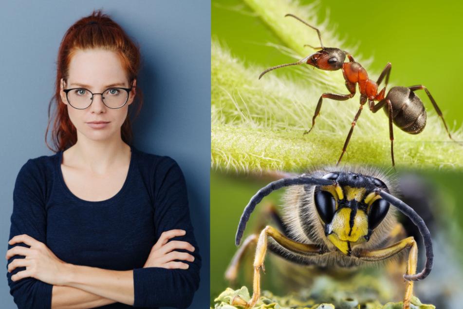 Keine Chance den Plagegeistern! So haltet Ihr Euch Insekten und Spinnen vom Leib