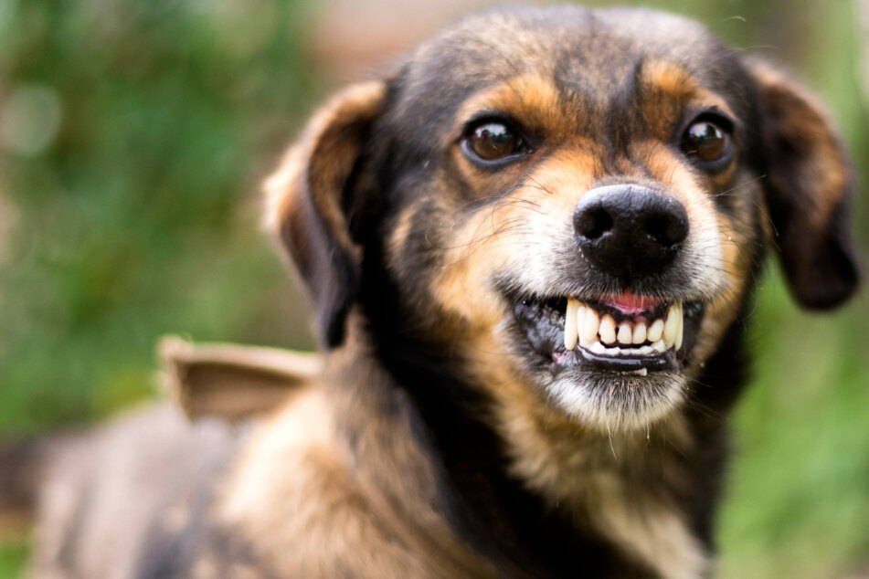 Blutiger Angriff: Aggro-Hund beißt drei Kinder, der Halterin ist es egal