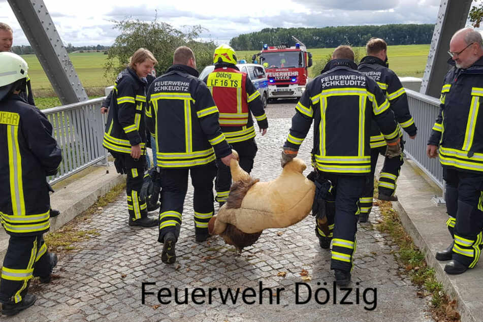 Was für ein Einsatz: Kameraden der Feuerwehr Dölzig retten einen einsamen Plüsch-Löwen.