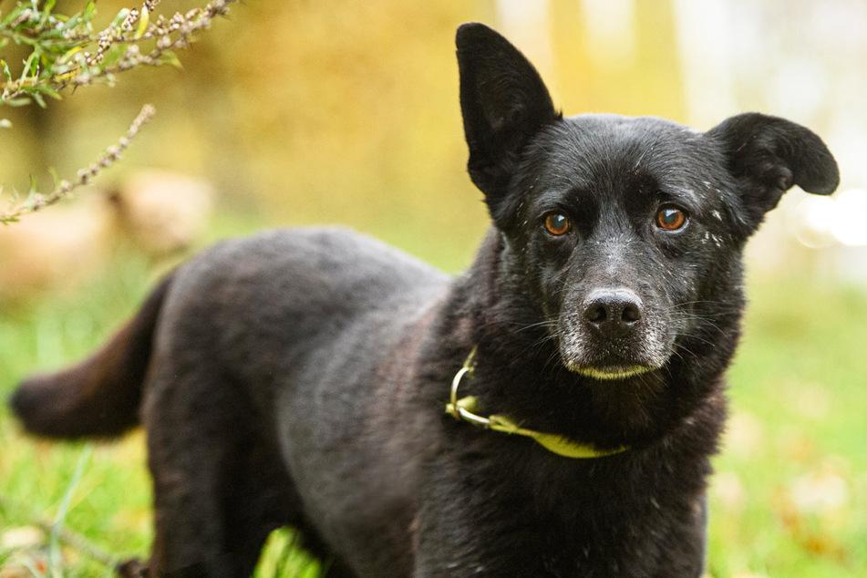 Blinder Hund wird adoptiert, will aber einfach nur zurück: Fünf Tage später geschieht ein Wunder