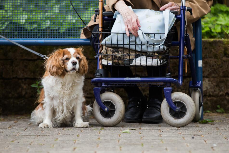 Nicht nur für Senioren sind Haustiere wichtige Wegbegleiter.