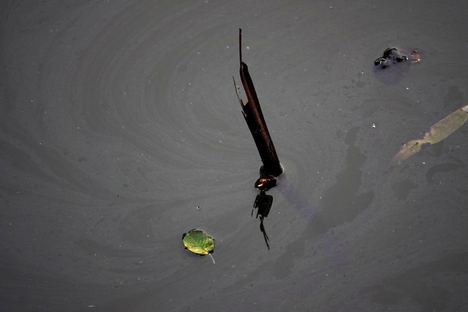 Wegen der Schlieren im Wasser befürchtete man, dass aus dem Skoda Öl ausgelaufen sein könnte.