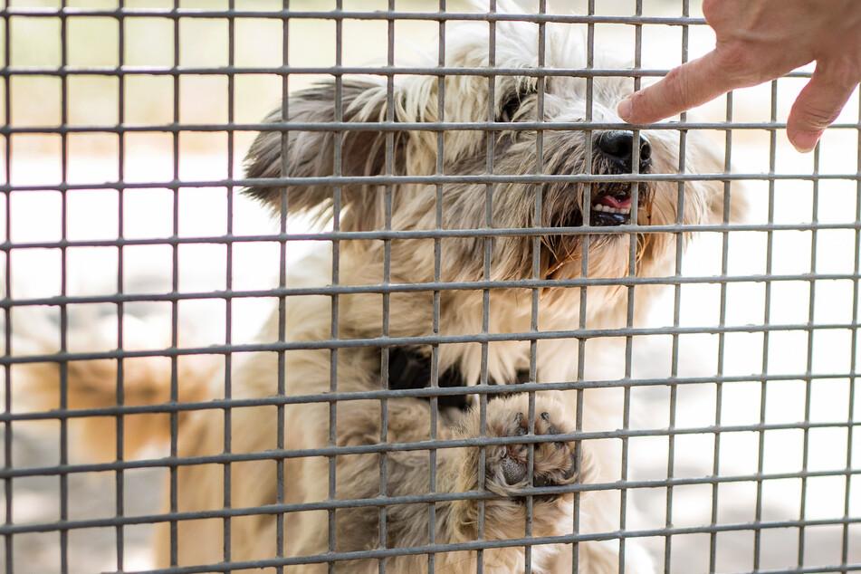 Ein Hund schnüffelt im Tierheim an der Hand eines Pflegers. (Symbolbild)