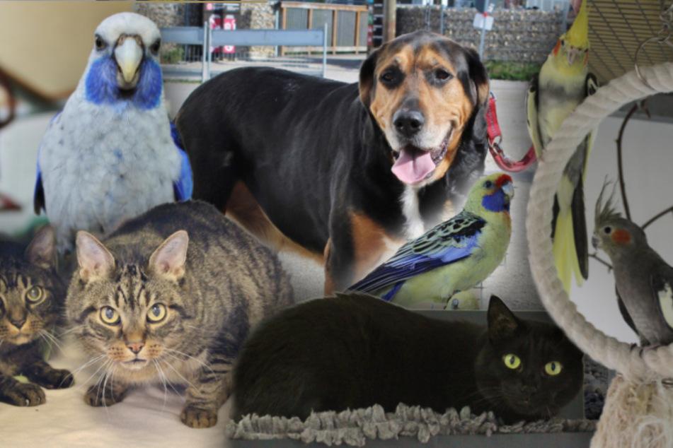 8 besondere Tiere: Hunde, Katzen und jede Menge Vögel suchen ein Zuhause