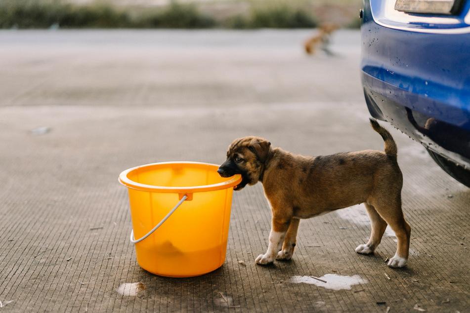Nicht nur von außen, sondern auch von innen sollte man sein Auto regelmäßig reinigen – dann hat man auch wenig Ärger mit Hundegeruch im Innenraum.