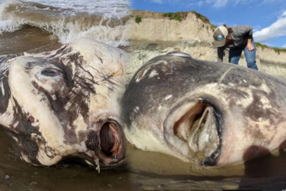 """Touristen entdecken riesige Kreatur am Strand: """"Sah aus wie ein Alien"""""""