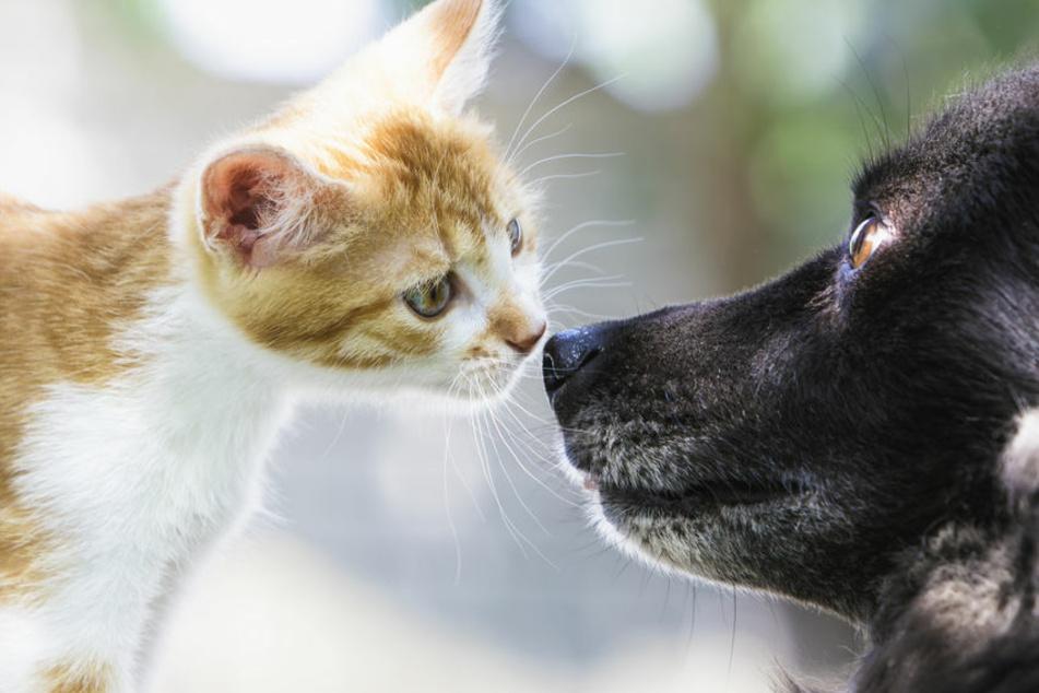 Nur noch ein paar dünne Läppchen übrig: Tierheim hat dringenden Appell
