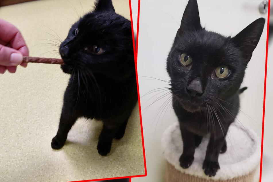 Er will vor allem kuscheln: Katzen-Opi Felix sucht ein neues Zuhause