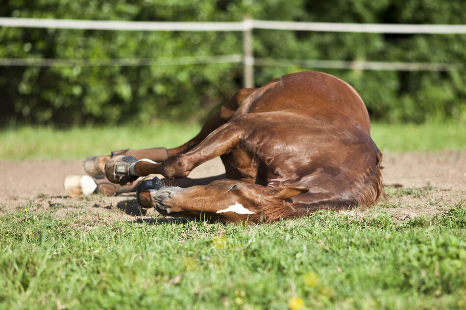 In Lichtenstein waren vier Pferde in schlechtem gesundheitlichen Zustand, ein Tier musste eingeschläfert werden. (Symbolbild)
