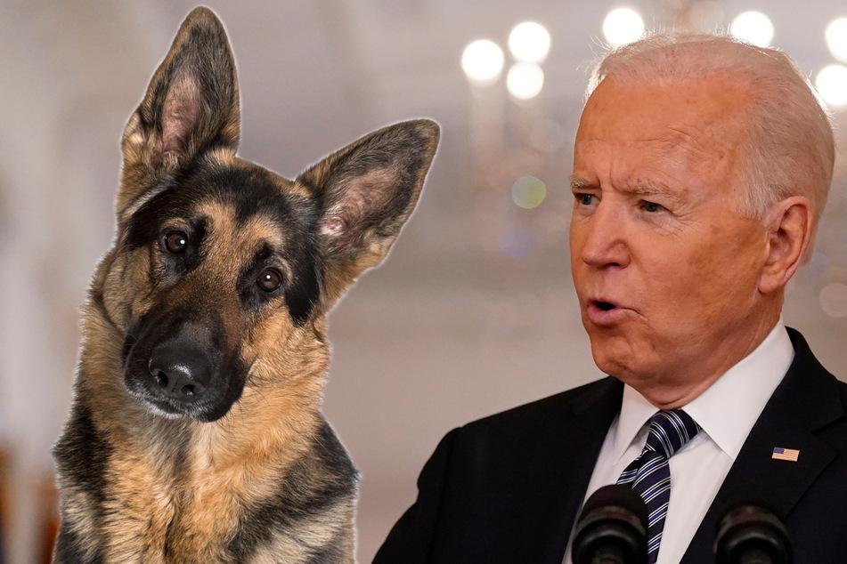 """Joe Biden behauptet: """"Hunde können helfen, Krebs zu heilen!"""" Ist das wahr?"""