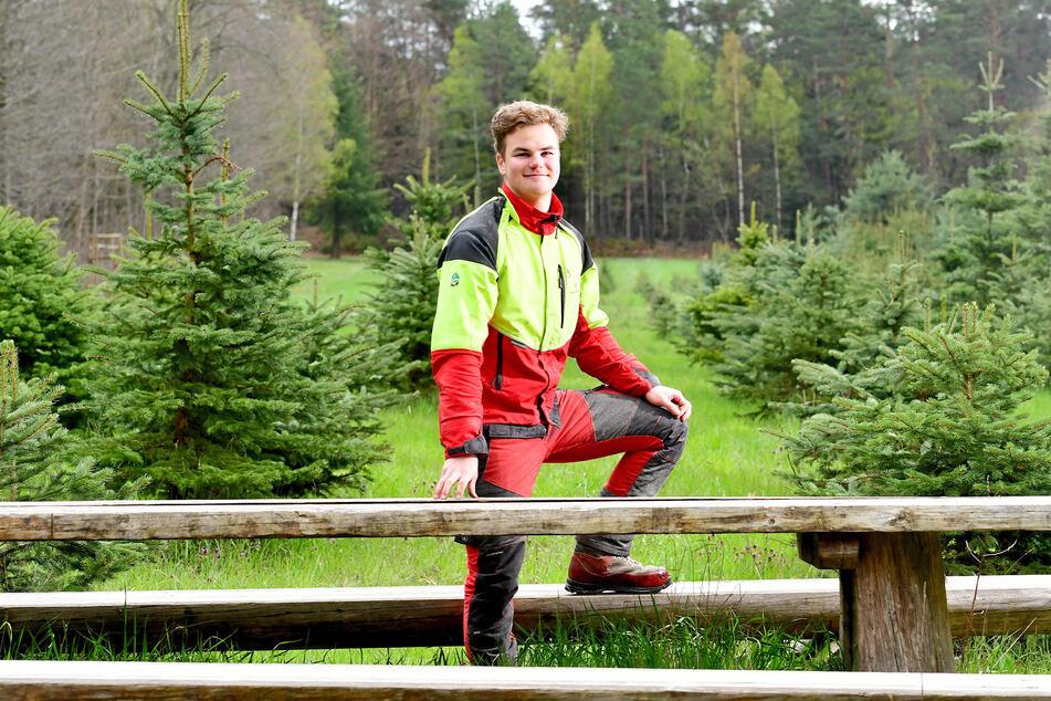 Jonas Hauptmann (18) lernt Forstwirst beim Sachsenforst und arbeitet auf der Weihnachtsbaumplantage mitten in der Dresdner Heide.
