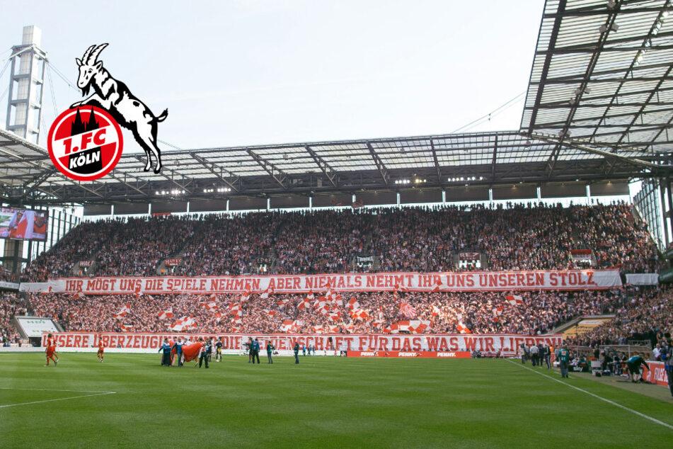 1. FC Köln: Böllerwerfer droht Mindeststrafe von zwei Jahren