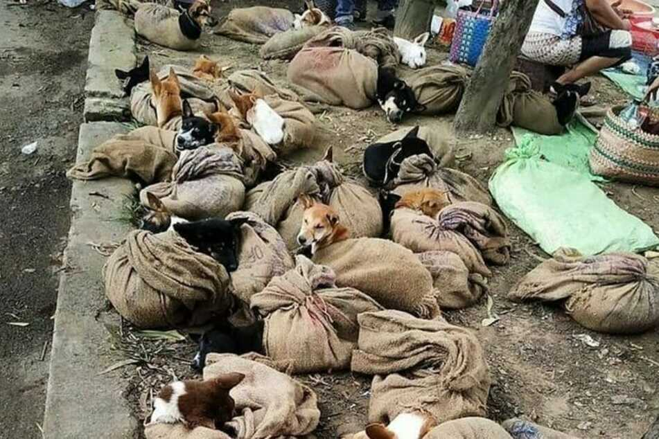 Zusammen gepfercht in alten Säcken warten die Tiere auf ihren baldigen Tod.