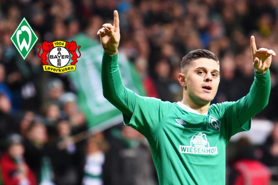 Bayer Leverkusen: Rashica-Wechsel in letzter Sekunde geplatzt!