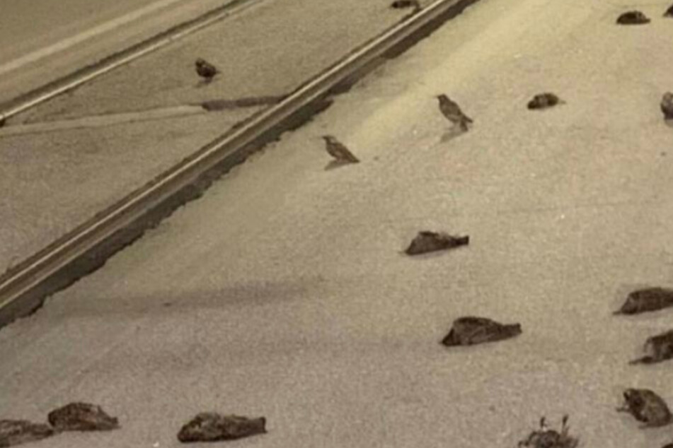 Viele Vögel kamen in der Silvesternacht ums Leben.