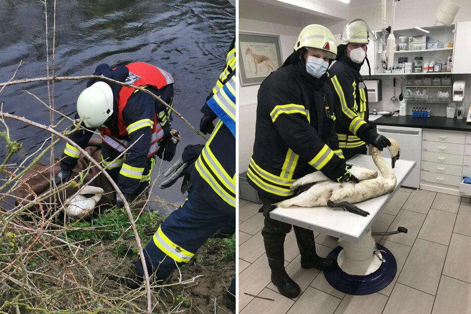In Olfen (Kreis Coesfeld) wurde die Feuerwehr am Samstag zu einem verletzten Schwan in der Lippe alarmiert, der zu ertrinken drohte. Die Einsatzkräfte retteten das Tier.