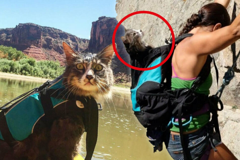 Adventure cat disappears and hundreds are joining the search