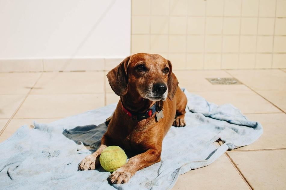 Wenn Hunde gut beschäftigt sind, kommen sie erst gar nicht auf die Idee, Blödsinn zu machen.
