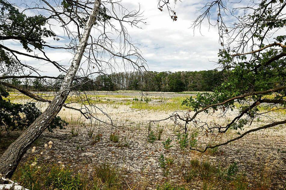 Die Bennewitzer Teiche sind regelrecht verschwunden.