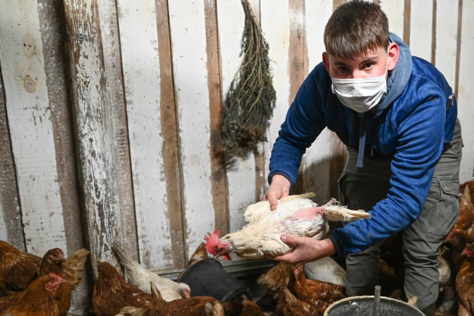 Andere Teenies hocken am PC: Dieser 17-Jährige rettet Hühner vorm Schlachter