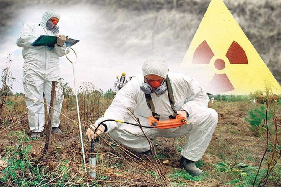 Dresdner Pilze sollen Tschernobyl säubern