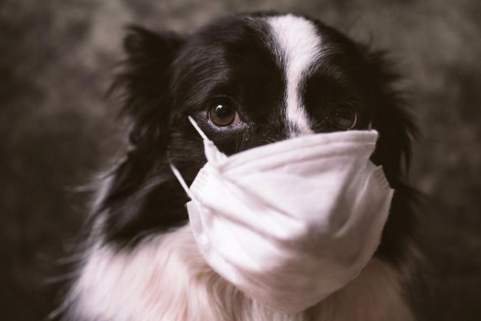 Viele Hunde vereinsamen aktuell in Zeiten des Coronavirus. (Symbolbild)