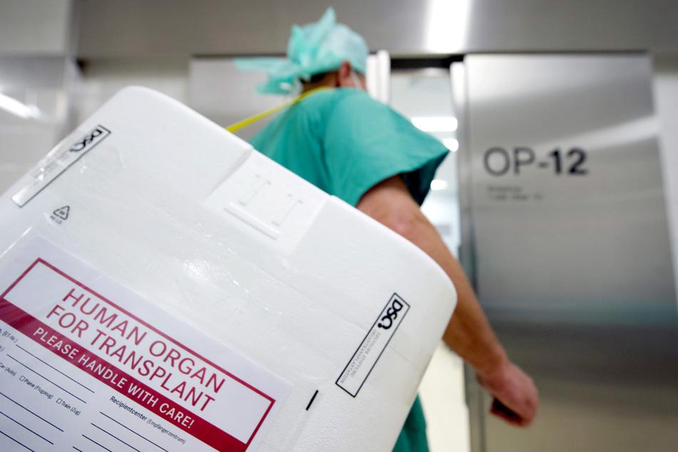 Ein Styropor-Behälter zum Transport von zur Transplantation vorgesehenen Organen wird am Eingang eines OP-Saales vorbeigetragen.
