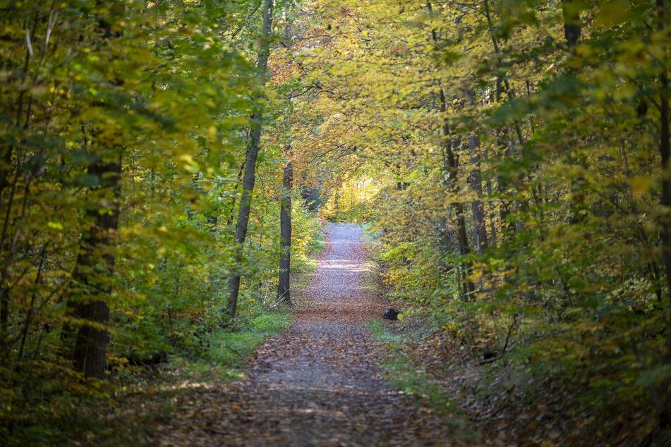 Bestattungswälder sind nicht umzäunt und für jedermann zugänglich.